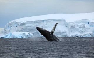 Antarctica Peninsula – Basecamp Plancius