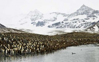 Explorer's Antarctica (Silver Explorer)