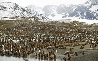 Falklands, South Georgia and Antarctic Islands