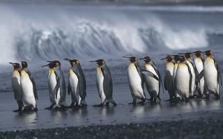 South Georgia and The Falklands (NG Explorer)