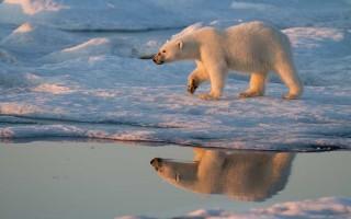 Wrangel Island - Image MKelly